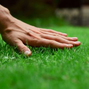 Hand touches artificial grass blades